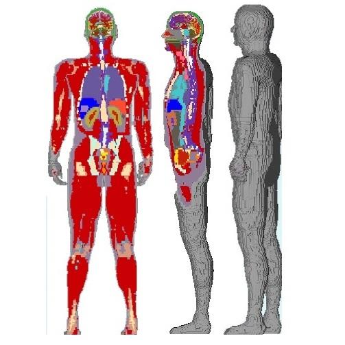 مدل بدن انسان